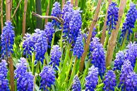 Spring-Blooms-7.jpg