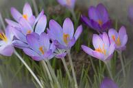 Spring_Flowers-27.jpg
