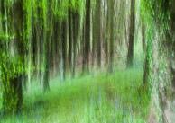 trees in Dorset, Langdon hill near Chideock